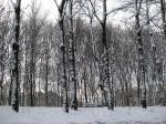 La neve di Dicembre 2014